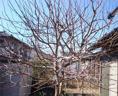 02_05りんごの木2.jpg
