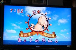 08_20きょうのわんこ.jpg