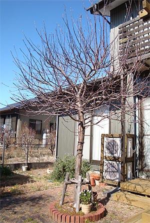 02_05りんごの木1.jpg