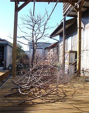 02_05りんごの木3.jpg