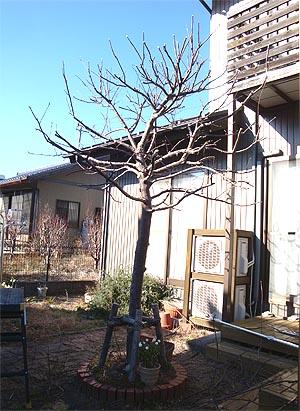 02_05りんごの木4.jpg