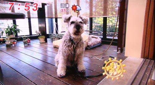 08_20めざましテレビ.jpg