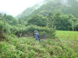 09_18放置茶畑.jpg